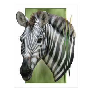 Zebra Post Cards