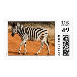 Zebra - Postage Stamp