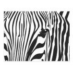 Zebra! Postcard