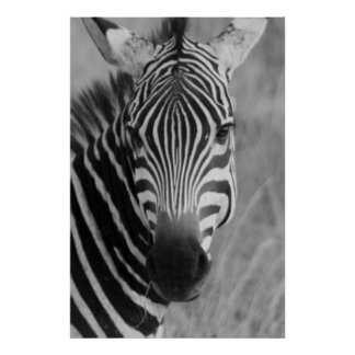 zebra poster FROM 8.99