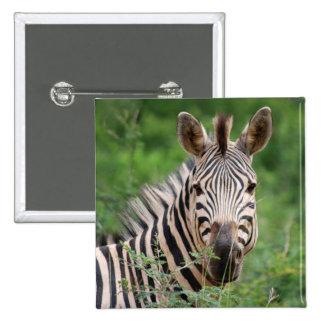 Zebra profile pins