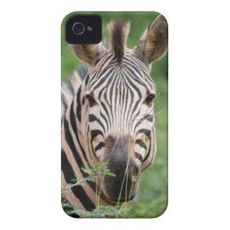Zebra profile Case-Mate iPhone 4 cases