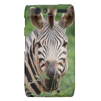 Zebra profile droid RAZR case