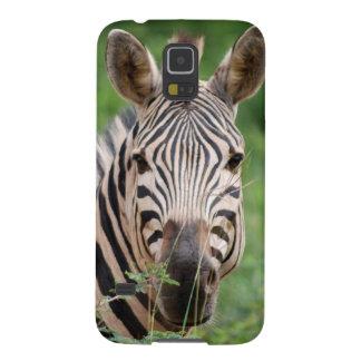 Zebra profile galaxy nexus cover