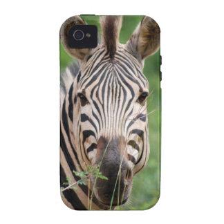 Zebra profile iPhone 4 covers