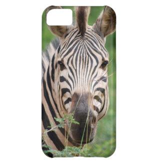 Zebra profile iPhone 5C covers