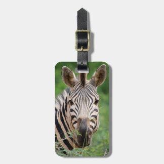 Zebra profile tag for luggage