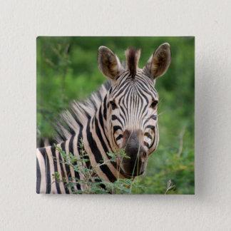 Zebra profile pinback button