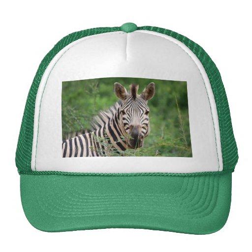 Zebra profile trucker hat