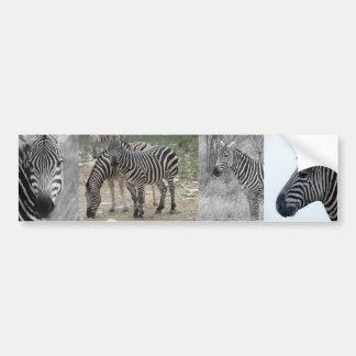 Zebra Safari Cute African Classy Stripes Car Bumper Sticker