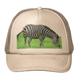 Zebra Safari Hat