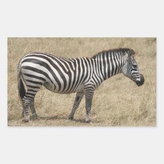 zebra short rectangular sticker