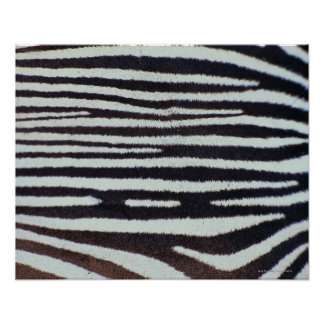 Zebra skin surface poster