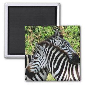zebra snuggle magnet