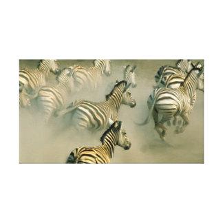 Zebra Stampede Canvas Print