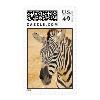 Zebra Stamps