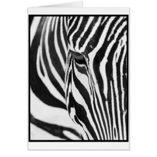 Zebra Stare Greeting Card