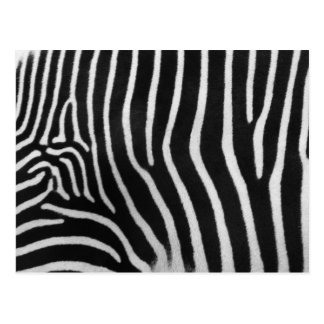 Zebra Stripe Pattern Postcard