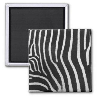 Zebra Stripe Pattern Square Magnet