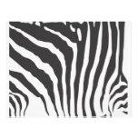 Zebra Stripe Print Pattern - Custom Letterhead