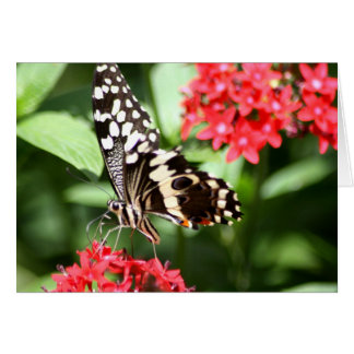 Zebra Striped Butterfly Card