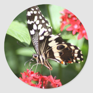 Zebra Striped Butterfly Classic Round Sticker