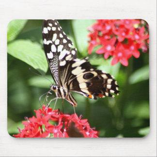 Zebra Striped Butterfly Mouse Pad