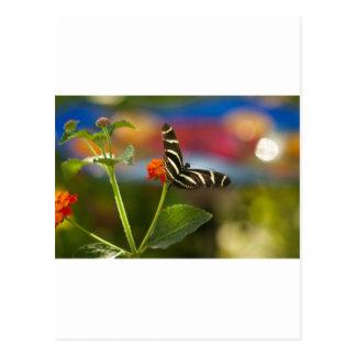 Zebra Striped Butterfly Postcard