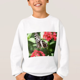 Zebra Striped Butterfly Sweatshirt
