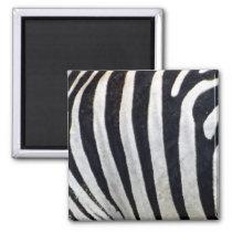 Zebra Stripes Close Up Magnet