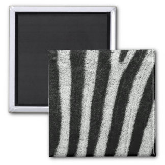 Zebra Stripes Magnet