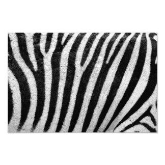 Zebra Stripes Photography Pattern Photo Print