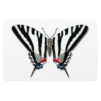 Zebra Swallowtail Butterfly Flexi Magnet