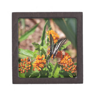 Zebra Swallowtail Butterfly Keepsake Box