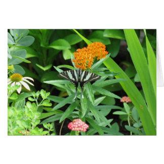 Zebra Swallowtail Card