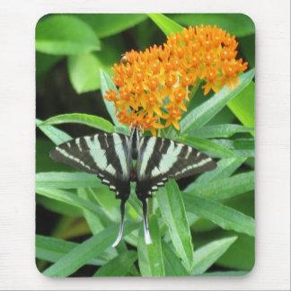 Zebra Swallowtail Mouse Pad