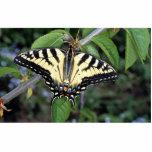Zebra swallowtail, Ontario, Canada Photo Sculptures