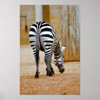 Zebra Tail print