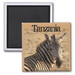 Zebra, Tanzanian Savannah 2 Inch Square Magnet