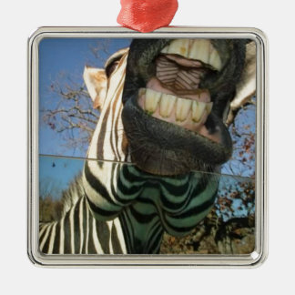 Zebra Teeth Metal Ornament