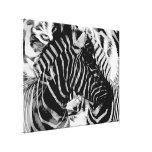 Zebra & Tiger Stripes Wrapped Canvas Canvas Print