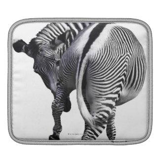 Zebra turning around iPad sleeve