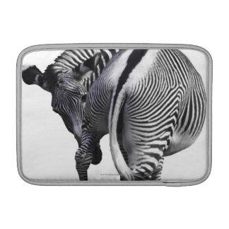 Zebra turning around MacBook sleeve