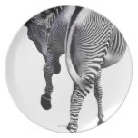 Zebra turning around party plates