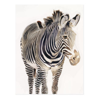 """Zebra"" Watercolor Wildlife Art Postcard"