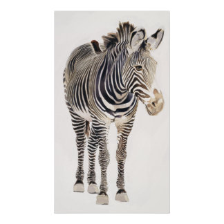 """Zebra"" Watercolor Wildlife Art Print & Poster"