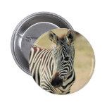 ZEBRA WILDLIF PINS