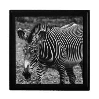 Zebra Wildlife Animal Photo Keepsake Box