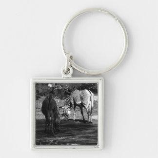 Zebra Wildlife Animal Photo Key Chain