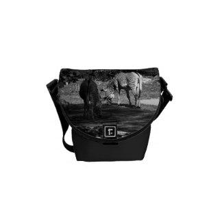 Zebra Wildlife Animal Photo Messenger Bag